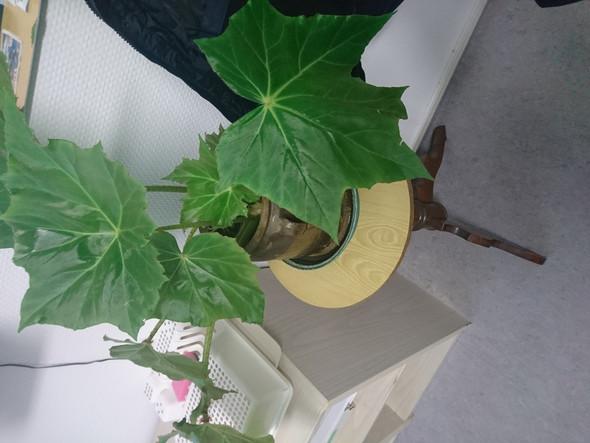 - (Garten, Pflanzen)