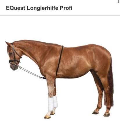 Wie longiert ihr eure Pferde?