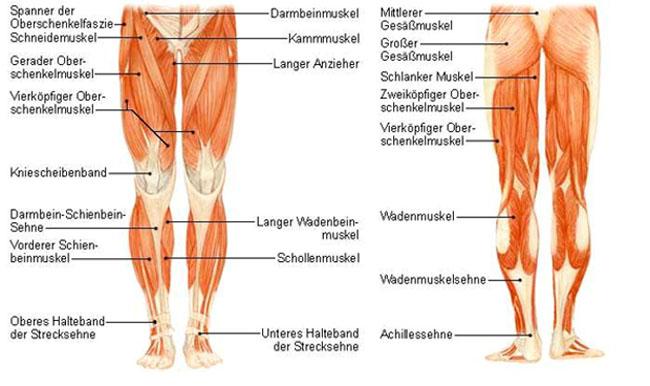 wadenmuskelriss