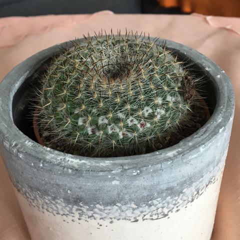 Mein Kaktus  - (Zeit, Welche Abstände)