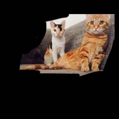 Diese  - (Tiere, Haustiere, Katzen)