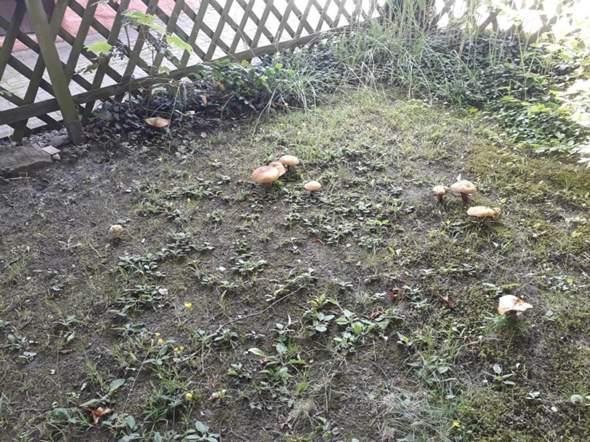 Wie nennen sich diese Pilze?