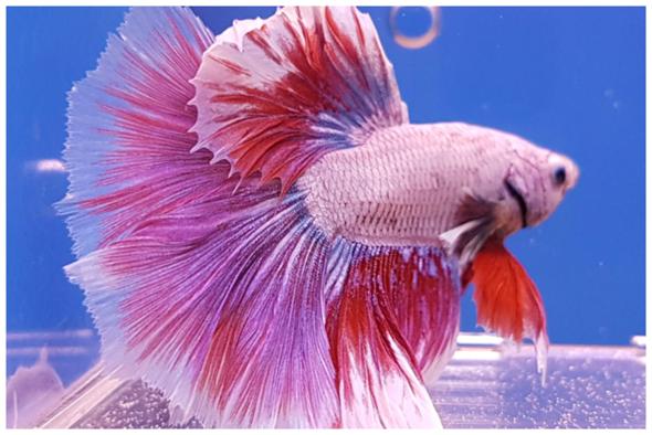 Wie nennen sich Fische dieser Art?