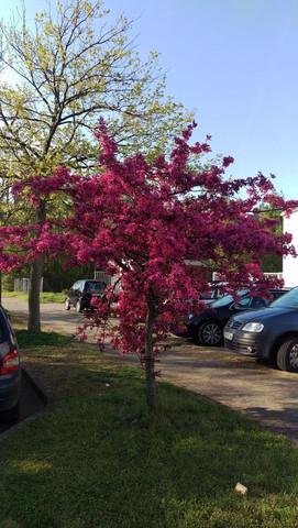 Wie nennt man bitte diesen netten gut aussehenden Baum? (Garten ...