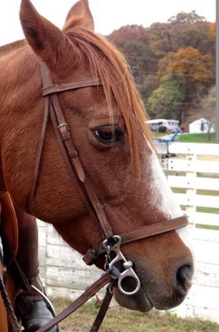 dieses Gebiss ^ - (Pferde, reiten, trense)