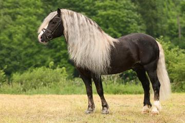 Pferd - (Pferde, Farbe, Natur)