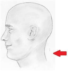 Kopf - (Kopf, Körperteile)
