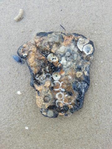 Wie nennt man solche Steine? Auch kleinere, ähnliche gibt es zuhauf z.B. an Usedoms Küste.