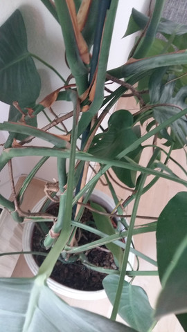 wie nennt sich diese pflanze und ist sie giftig f r katzen biologie pflanzen kitten. Black Bedroom Furniture Sets. Home Design Ideas