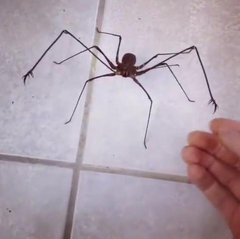 Spinne - (Medizin, Tiere, Biologie)