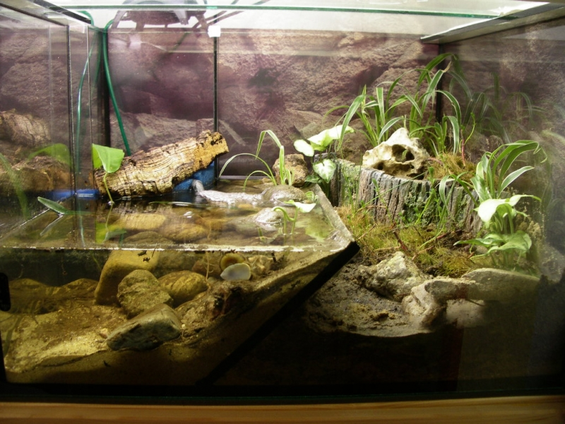 wie niedrig darf die wasserh he f r blaue floridakrebse sein tiere aquarium krebs. Black Bedroom Furniture Sets. Home Design Ideas
