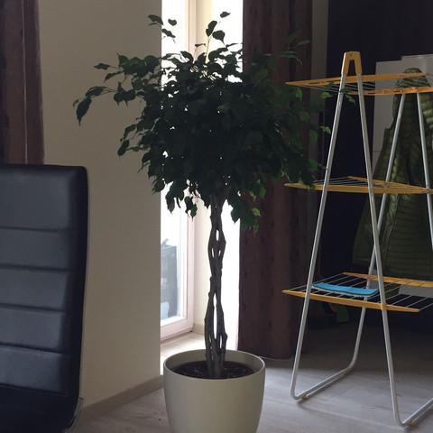 Baum Foto  - (Garten, Pflanzen, Baum)