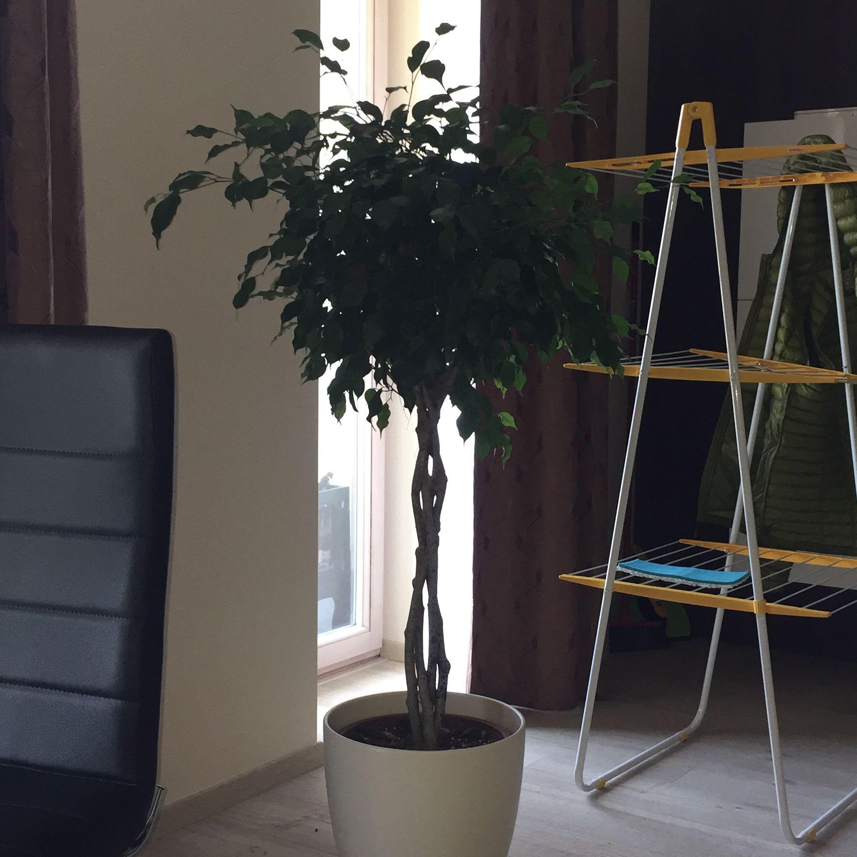wie oft baum gie en garten pflanzen giessen. Black Bedroom Furniture Sets. Home Design Ideas