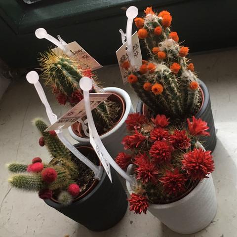 Das sind die Kakteen - (Wasser, Pflanzen, kaktus)