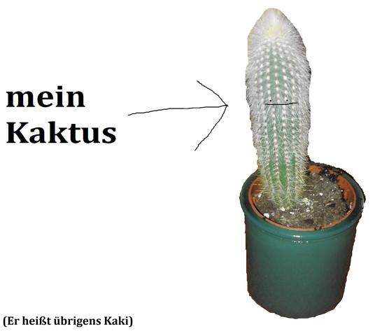 Kaki der Kaktus - (Wasser, Pflege, Pflanzen)