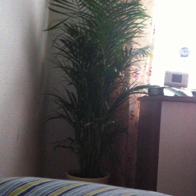 wie oft muss ich meine pflanze gie en pflanzen blumen g rtner. Black Bedroom Furniture Sets. Home Design Ideas