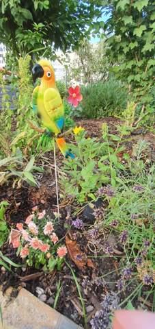 Wie oft sollte man im eigenen Garten gießen im Sommer?
