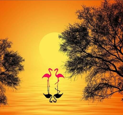 Wie paaren sich Flamingos?