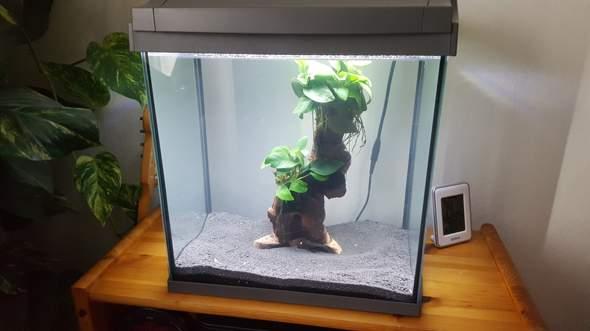 Wie richte ich ein Aquarium für Zwerggarnelen ein?