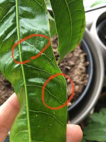 - (Pflanzen, Insekten, Pflanzenpflege)