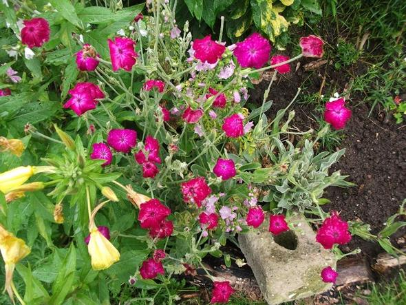 2. - (Namen, Pflanzen, Blumen)