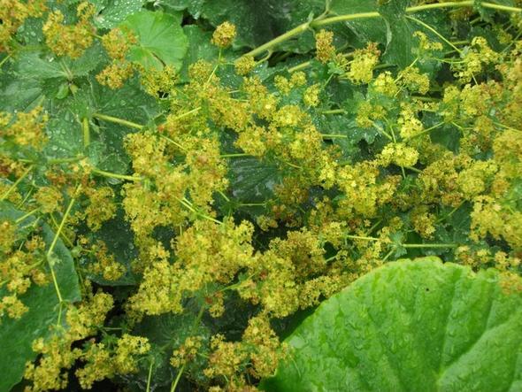 3. - (Namen, Pflanzen, Blumen)