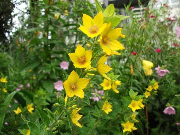 5. - (Namen, Pflanzen, Blumen)