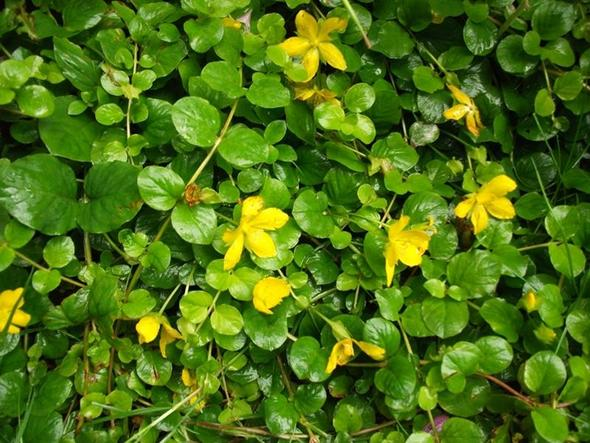 6. - (Namen, Pflanzen, Blumen)