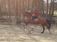 :/  - (Pferde, reiten, springen)
