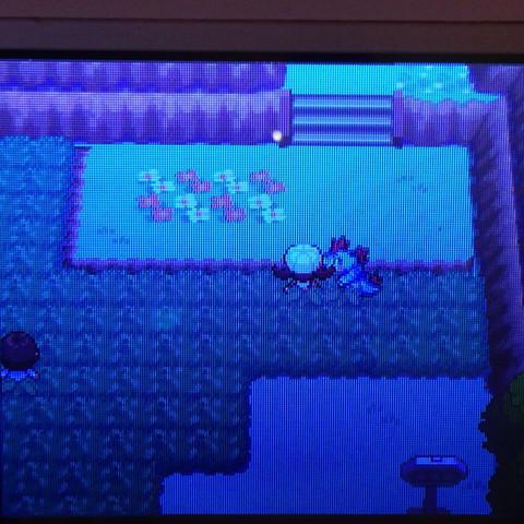 Pokémon  - (Pokemon, Nintendo, Pokemon Soul Silver)