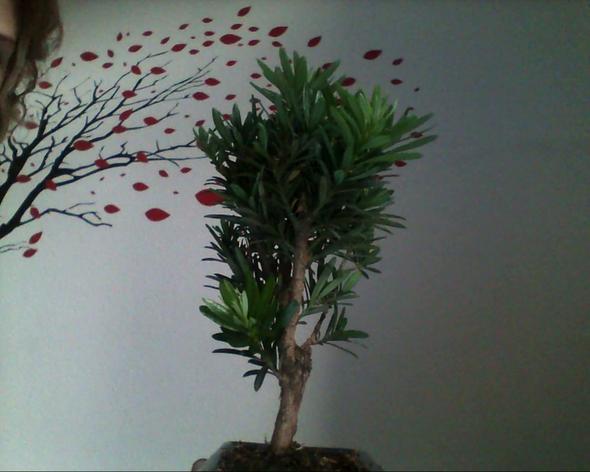 Der Bonsai von allen Seiten :2 - (Pflanzen, Baum)