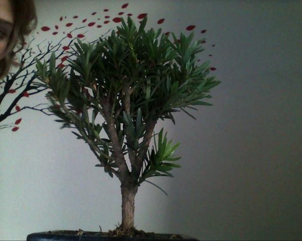 Der Bonsai von allen Seiten :3 - (Pflanzen, Baum)