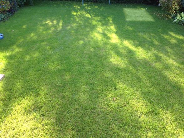 Wie soll ich den Rasen behandeln?