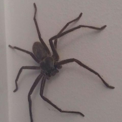 Spinne in Australien   - (Australien, Spinne)