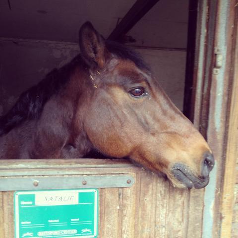 Natalie  - (Pferde, Reiten, Pflege)