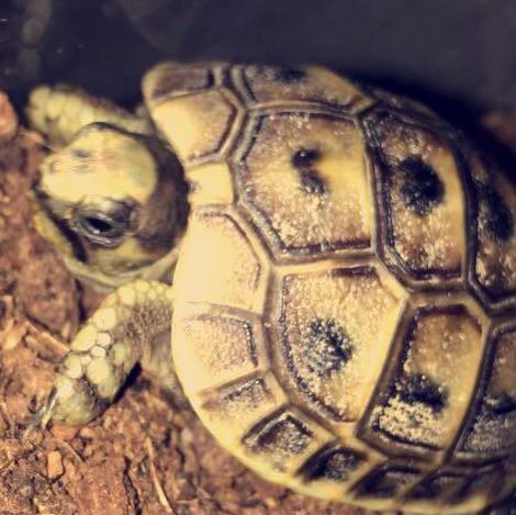 schildkröten namen