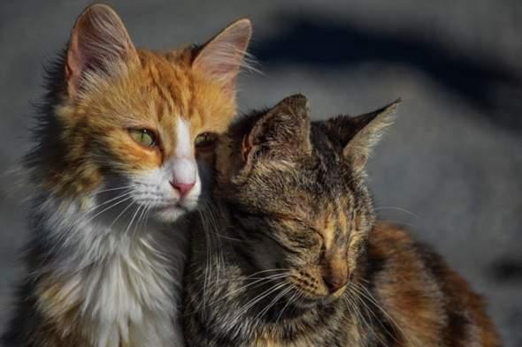 Wie sollen diese Katzen heißen?