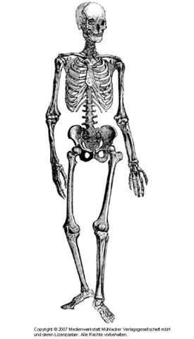 Wie stabil ist das Skelett?