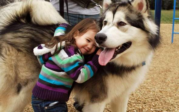 Wie stark ist die Bindung zwischen dir und deinem Haustier?