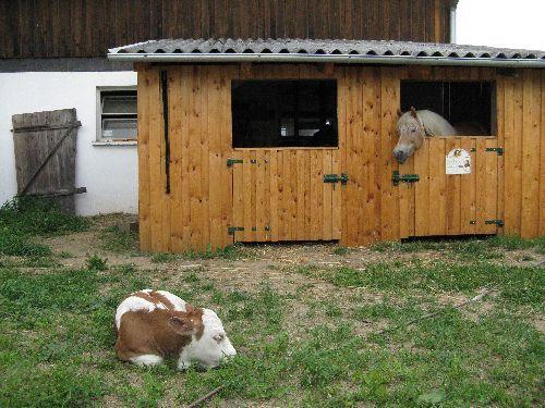 Wie teuer ist der bau von einem pferdestall pferde - Was kostet eine baugenehmigung fur ein gartenhaus ...
