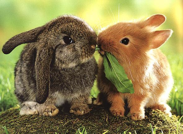 .. - (Kaninchen, Eltern überreden)