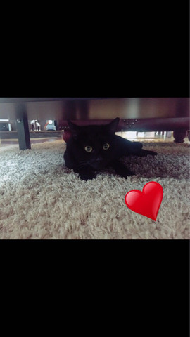 Blacky mein Baby..RIP - (Katze, Tod, Trauer)