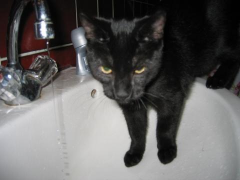 mein Dicker - (Katze, Katzen, Stromschlag)