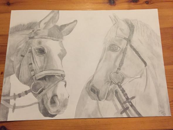 Pferde - (Pferde, Kunst, zeichnen)