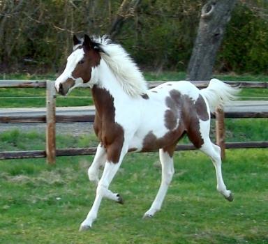 wie viel geld brauche ich f r ein pferd kaufen pferde. Black Bedroom Furniture Sets. Home Design Ideas