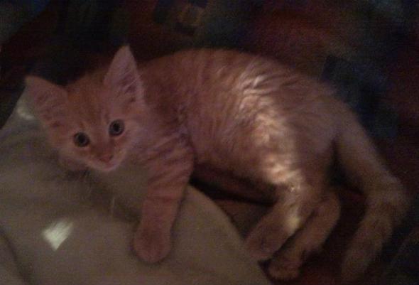 Teddy - (Kosten, Katzen, Impfung)