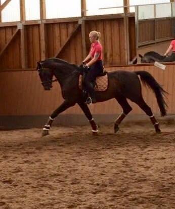 danger1 - (Pferde, reiten, springen)