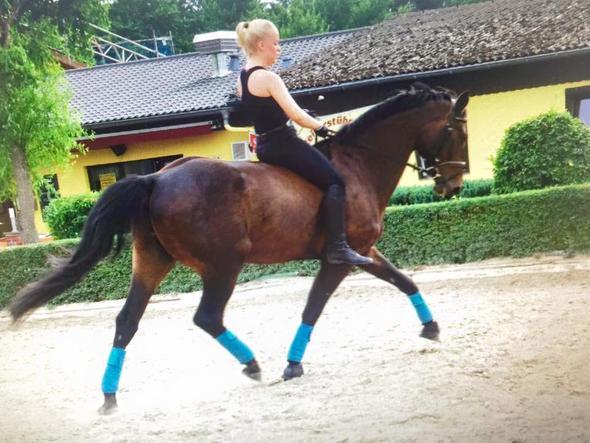 danger - (Pferde, reiten, springen)