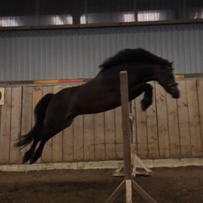 Das erste Bild von ihm :) - (Pferde, Verkauf, Pony)