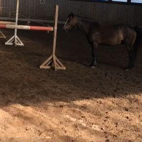 Das zweite Bild von ihm :) - (Pferde, Verkauf, Pony)